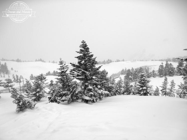 japan-snow