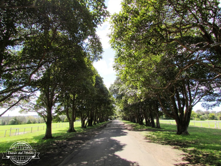 yaralla estate