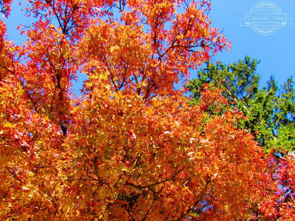 autunno a Sydney
