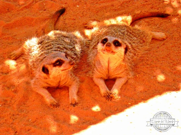 visitare l'Adelaide Zoo